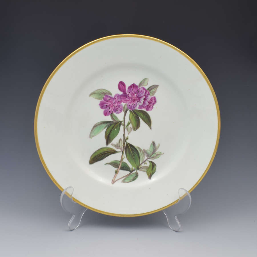 Derby Porcelain Botanical Dessert Plate Siberian Rhododendron c.1806