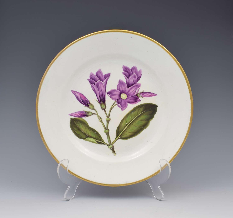 Derby Porcelain Botanical Dessert Plate Cryptostegia c.1806