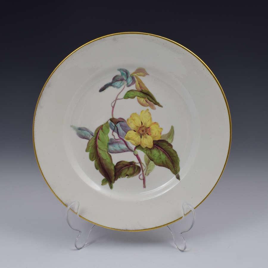 Derby Porcelain Botanical Dessert Plate Toothed Leaved Hibbertia
